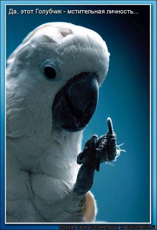 Котоматрица: Да, этот Голубчик - мстительная личность...