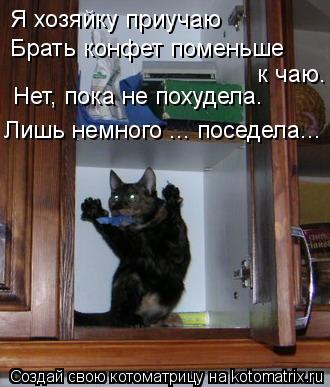 Котоматрица - Я хозяйку приучаю Брать конфет поменьше к чаю. Нет, пока не похудела.
