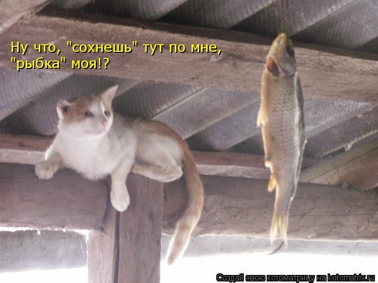 """Котоматрица: Ну что, """"сохнешь"""" тут по мне, """"рыбка"""" моя!?"""