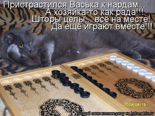 Котоматрица - Пристрастился Васька к нардам... А хозяйка-то как рада!!! Шторы целы..