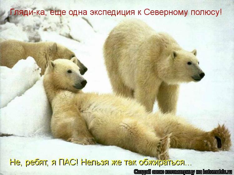 Котоматрица: Гляди-ка, еще одна экспедиция к Северному полюсу! Не, ребят, я ПАС! Нельзя же так обжираться...