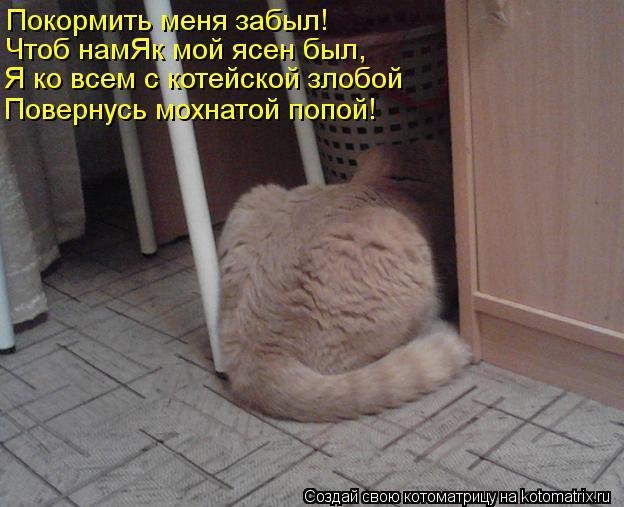 Котоматрица: Покормить меня забыл! Чтоб намЯк мой ясен был, Я ко всем с котейской злобой Повернусь мохнатой попой!