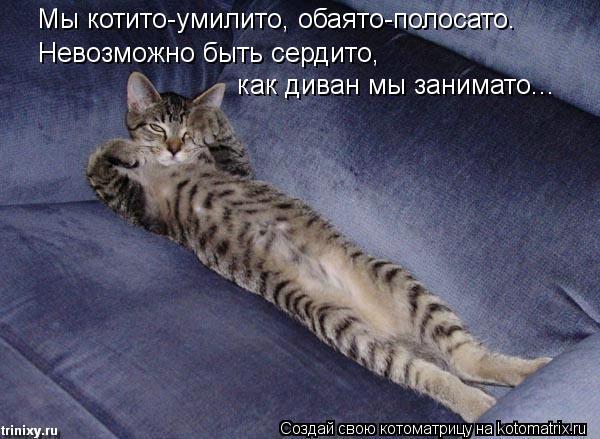 Котоматрица - Мы котито-умилито, обаято-полосато. Невозможно быть сердито, как диван