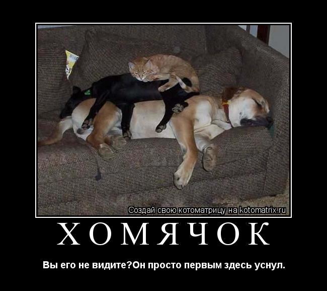 Котоматрица: хомячок Вы его не видите?Он просто первым здесь уснул.