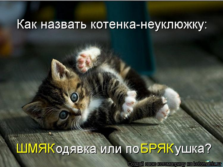 Котоматрица: Как назвать котенка-неуклюжку: ШМЯК одявка или по БРЯК ушка?