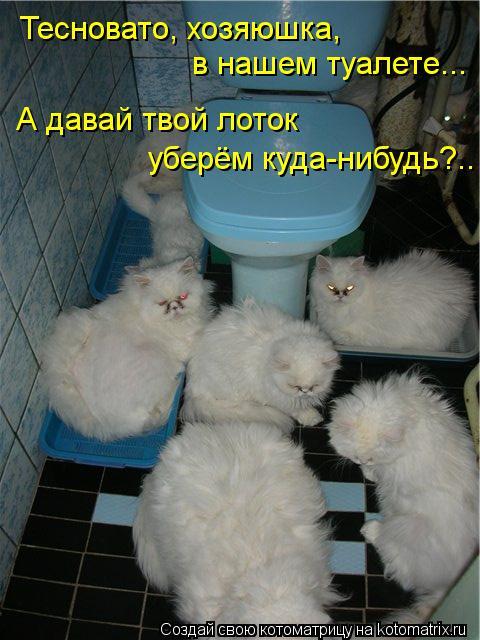 Котоматрица - Тесновато, хозяюшка,  в нашем туалете... А давай твой лоток  уберём ку
