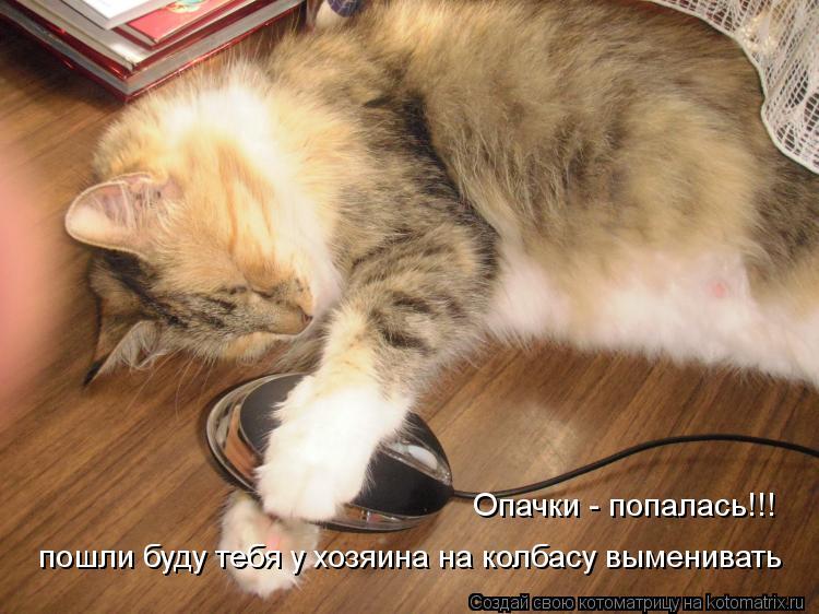 Котоматрица: пошли буду тебя у хозяина на колбасу выменивать Опачки - попалась!!!