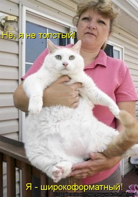 Котоматрица: Я - широкоформатный! Не, я не толстый!