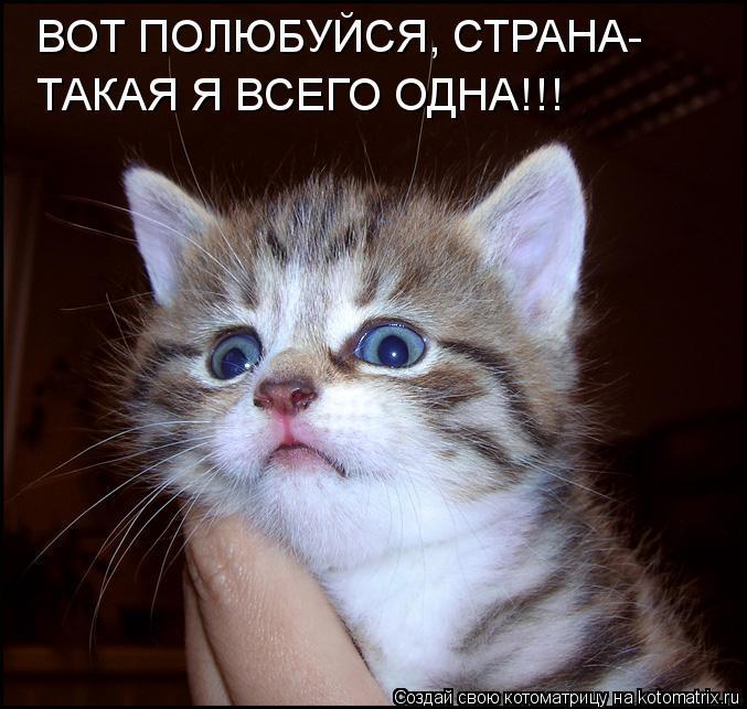 Котоматрица: ВОТ ПОЛЮБУЙСЯ, СТРАНА- ТАКАЯ Я ВСЕГО ОДНА!!!