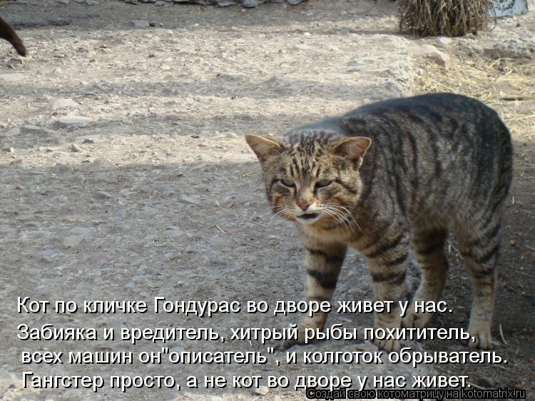 Котоматрица: Кот по кличке Гондурас во дворе живет у нас. Забияка и вредитель, хитрый рыбы похититель, Гангстер просто, а не кот во дворе у нас живет. всех