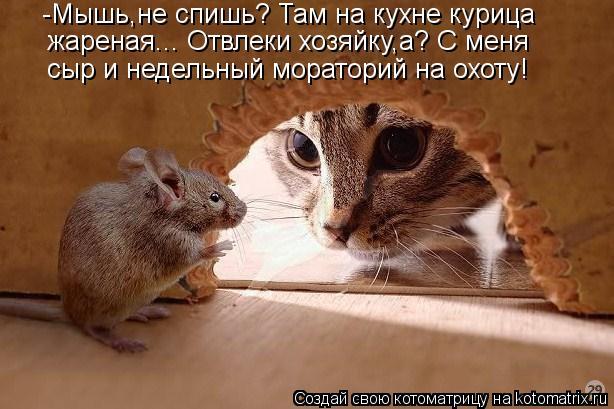 Котоматрица: -Мышь,не спишь? Там на кухне курица  жареная... Отвлеки хозяйку,а? С меня сыр и недельный мораторий на охоту!