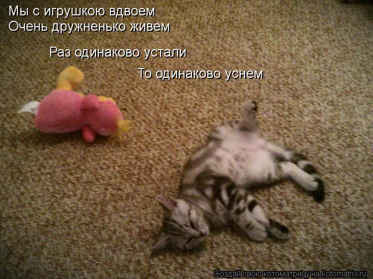 Котоматрица: Мы с игрушкою вдвоем Очень дружненько живем Раз одинаково устали То одинаково уснем