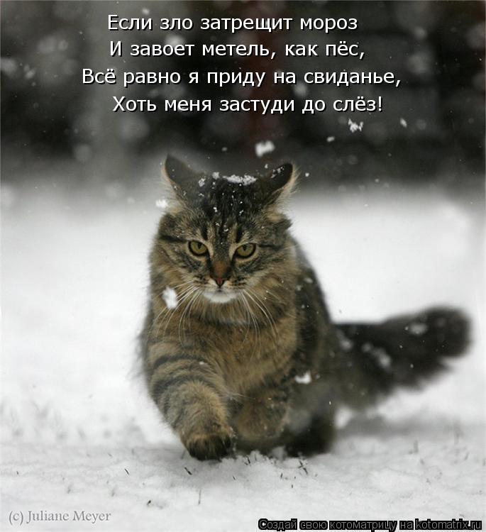 Котоматрица: Если зло затрещит мороз  Всё равно я приду на свиданье, Хоть меня застуди до слёз!  И завоет метель, как пёс,
