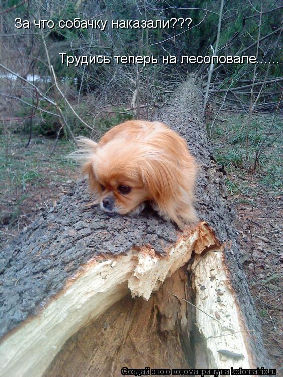 Котоматрица: За что собачку наказали??? Трудись теперь на лесоповале......