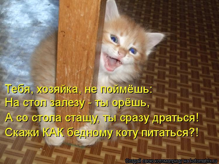 Котоматрица: Тебя, хозяйка, не поймёшь: А со стола стащу, ты сразу драться! Скажи КАК бедному коту питаться?! На стол залезу - ты орёшь,