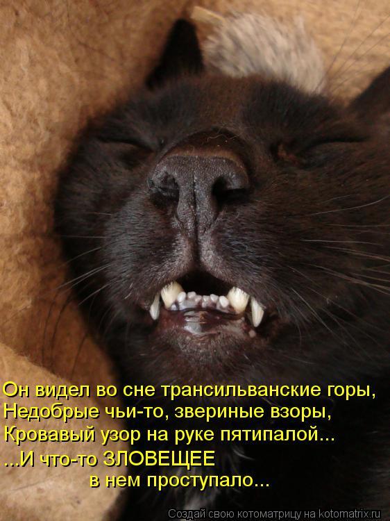 Котоматрица - Он видел во сне трансильванские горы, Недобрые чьи-то, звериные взоры,