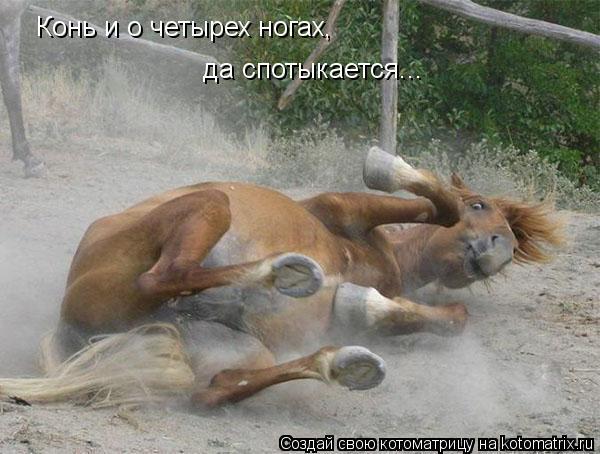 Котоматрица: Конь и о четырех ногах, да спотыкается...