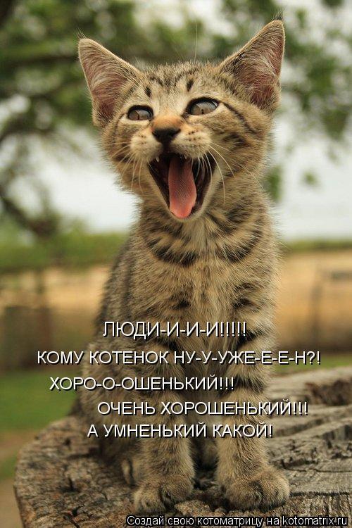 Котоматрица: А УМНЕНЬКИЙ КАКОЙ! КОМУ КОТЕНОК НУ-У-УЖЕ-Е-Е-Н?! ЛЮДИ-И-И-И!!!!! ХОРО-О-ОШЕНЬКИЙ!!! ОЧЕНЬ ХОРОШЕНЬКИЙ!!!