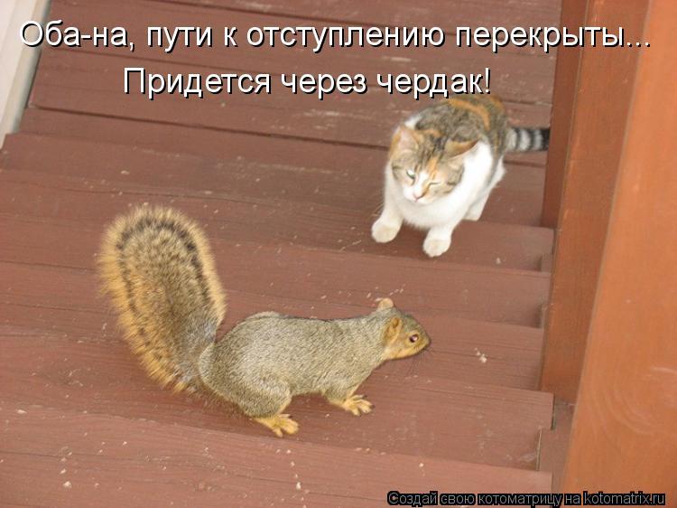 Котоматрица: Оба-на, пути к отступлению перекрыты... Придется через чердак!