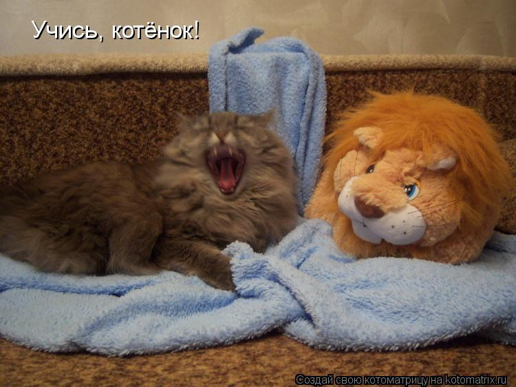 Котоматрица: Учись, котёнок!