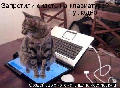Котоматрица: Запретили сидеть на клавиатуре?  Ну ладно...