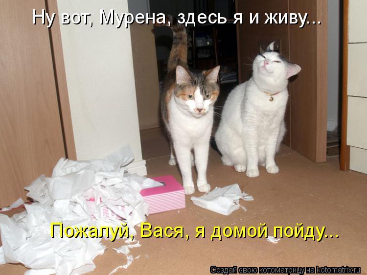 Котоматрица - Ну вот, Мурена, здесь я и живу... Пожалуй, Вася, я домой пойду...