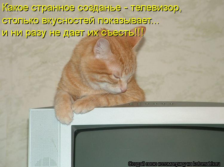 Котоматрица: Какое странное созданье - телевизор, столько вкусностей показывает... и ни разу не дает их съесть!!!
