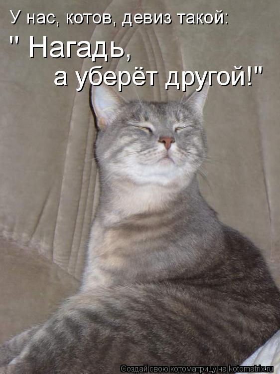 """Котоматрица: У нас, котов, девиз такой: """" Нагадь, а уберёт другой!"""""""