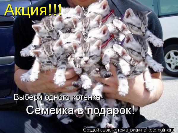 Котоматрица: Акция!!! Выбери одного котёнка- Семейка в подарок!