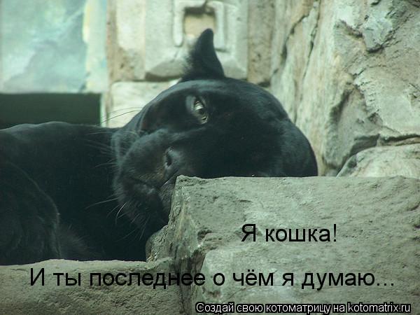 Котоматрица: И ты последнее о чём я думаю... Я кошка!