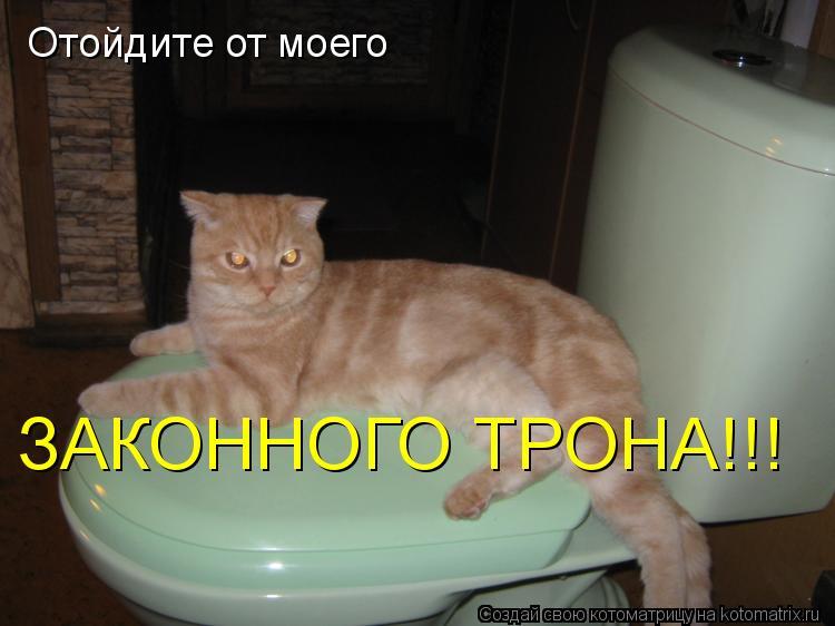 Котоматрица: Отойдите от моего ЗАКОННОГО ТРОНА!!!