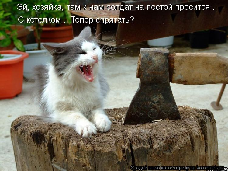 Котоматрица - Эй, хозяйка, там к нам солдат на постой просится...  С котелком... Топ