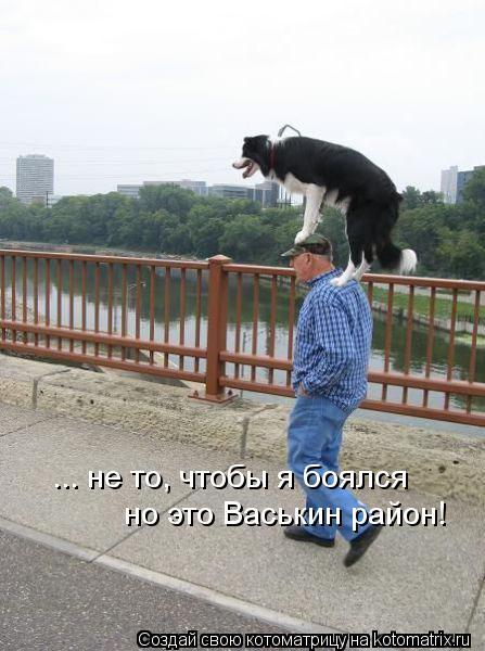 Котоматрица: ... не то, чтобы я боялся  но это Васькин район!