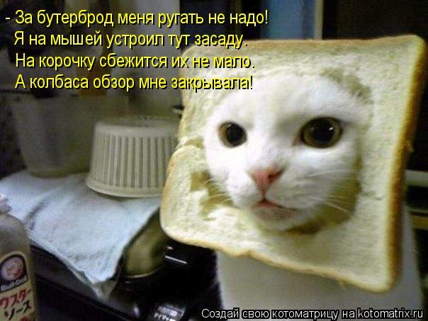 Котоматрица: - За бутерброд меня ругать не надо! Я на мышей устроил тут засаду. На корочку сбежится их не мало. А колбаса обзор мне закрывала!
