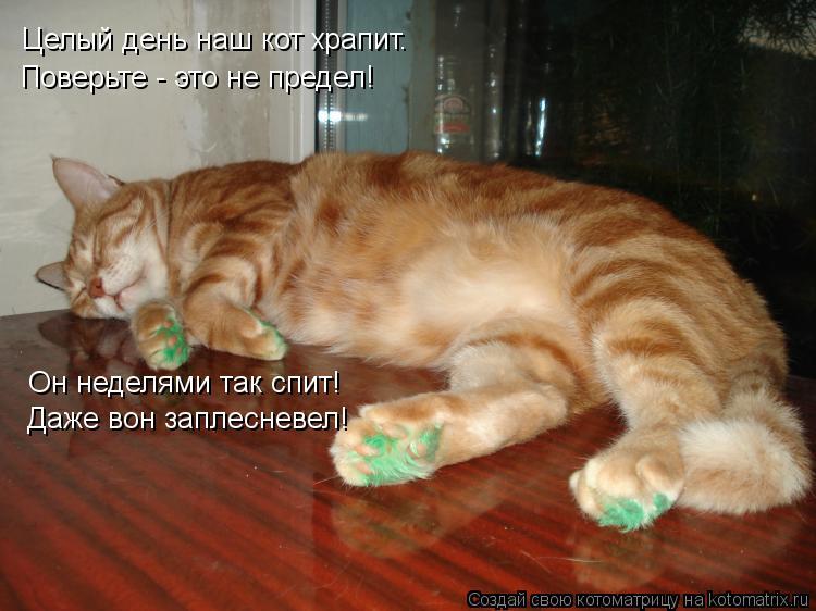 Котоматрица: Целый день наш кот храпит. Поверьте - это не предел! Он неделями так спит! Даже вон заплесневел!