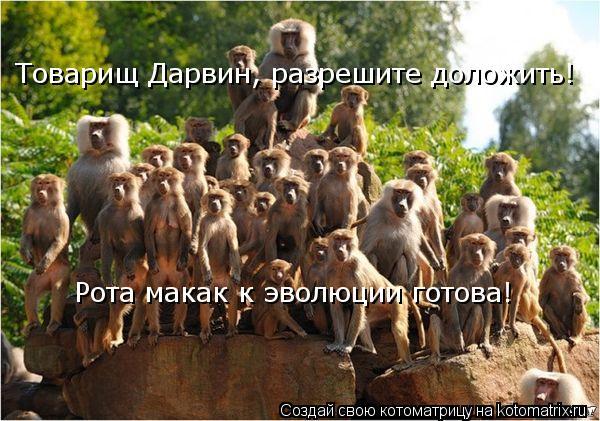 Котоматрица: Товарищ Дарвин, разрешите доложить!  Рота макак к эволюции готова!