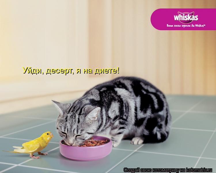 Котоматрица: Уйди, десерт, я на диете!