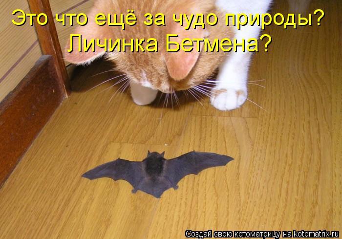Котоматрица - Это что ещё за чудо природы?  Личинка Бетмена?
