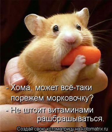 Котоматрица: - Хома, может всё-таки порежем морковочку? - Не штоит витаминами рашбрашываться.