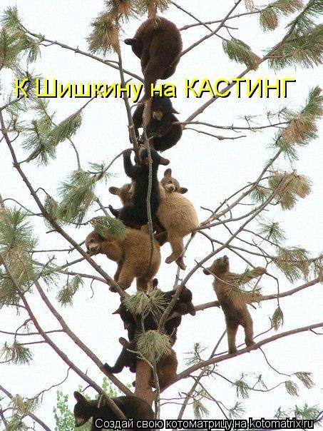 Котоматрица: К Шишкину на КАСТИНГ