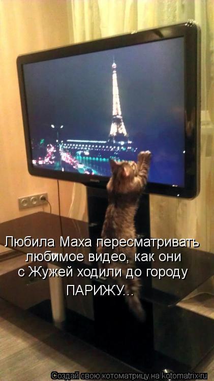 Котоматрица - Любила Маха пересматривать любимое видео, как они  ПАРИЖУ... с Жужей х
