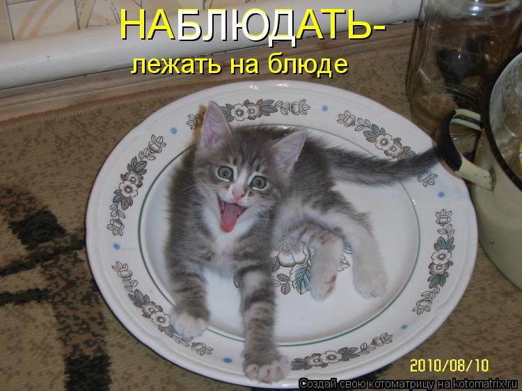 Котоматрица - НАБЛЮДАТЬ- лежать на блюде БЛЮД