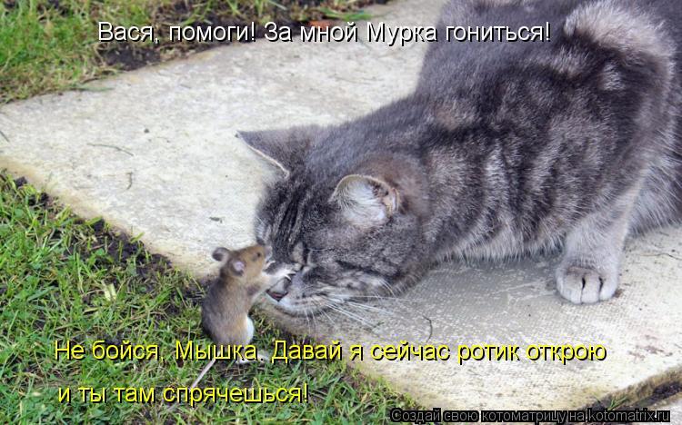 Котоматрица: Вася, помоги! За мной Мурка гониться! Не бойся, Мышка. Давай я сейчас ротик открою и ты там спрячешься!