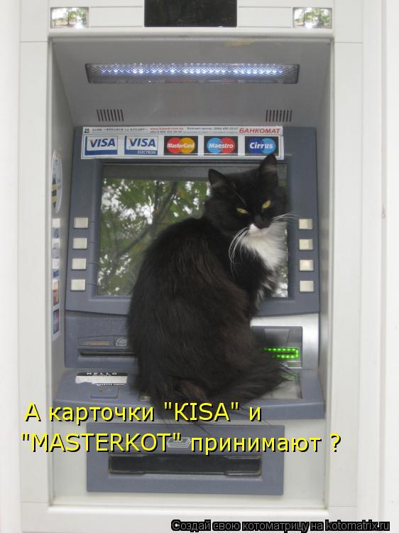 """Котоматрица: А карточки """"КISA"""" и  """"MASTERKOT"""" принимают ?"""