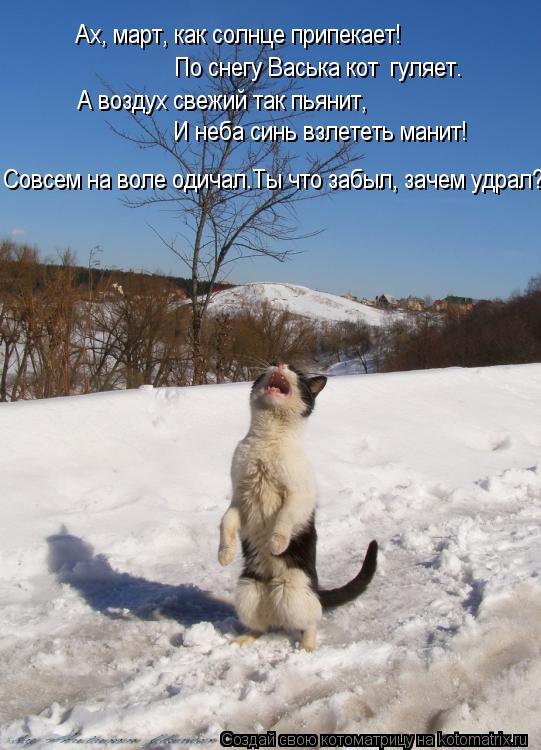 Котоматрица: По снегу Васька кот  гуляет. Ах, март, как солнце припекает! А воздух свежий так пьянит, И неба синь взлететь манит! Совсем на воле одичал.Ты ч