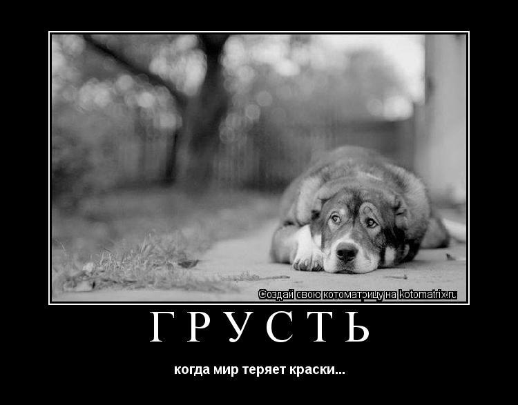 Котоматрица: грусть когда мир теряет краски...