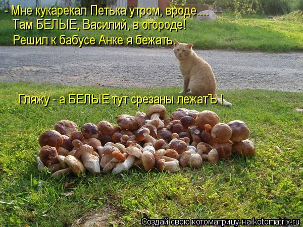 Котоматрица: - Мне кукарекал Петька утром, вроде.... Там БЕЛЫЕ, Василий, в огороде! Решил к бабусе Анке я бежать. Гляжу - а БЕЛЫЕ тут срезаны лежатЪ !