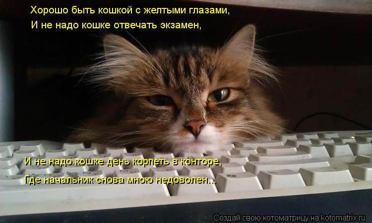 Котоматрица: Хорошо быть кошкой с желтыми глазами, И не надо кошке отвечать экзамен, И не надо кошке день корпеть в конторе, Где начальник снова мною недо