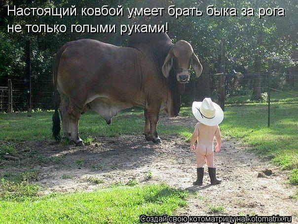 Котоматрица: Настоящий ковбой умеет брать быка за рога не только голыми руками!