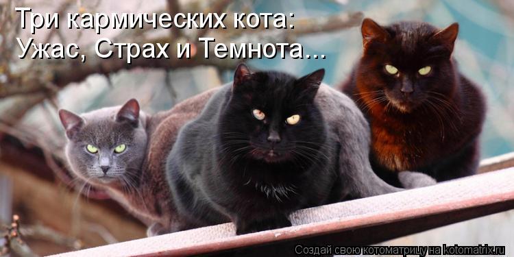 Котоматрица - Три кармических кота: Ужас, Страх и Темнота...